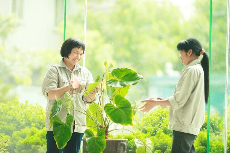 cung cấp dịch vụ chăm sóc cảnh quan môi trường